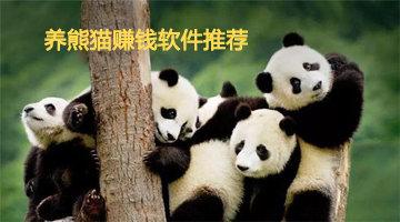 养熊猫赚钱软件