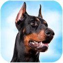 杜宾狗模拟器