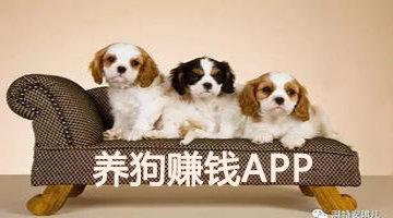 养狗赚钱软件