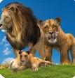 丛林王国:狮子家族