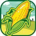 丰收的玉米红包版