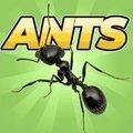 口袋蚂蚁模拟器破解版中文版