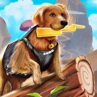 Zoro宠物狗竞赛