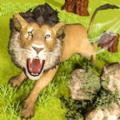 野生动物果酱猫1