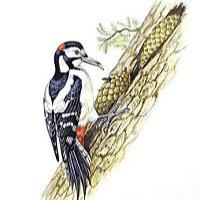 啄木鸟快讯