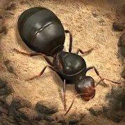 蚂蚁地下王国